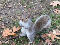 A squirrel seen at Central Park