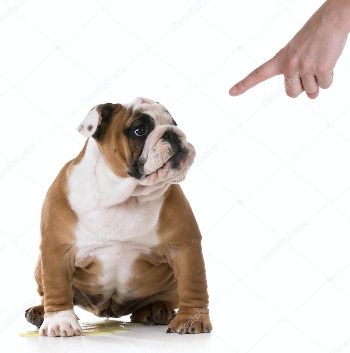 Hond plasje straffen