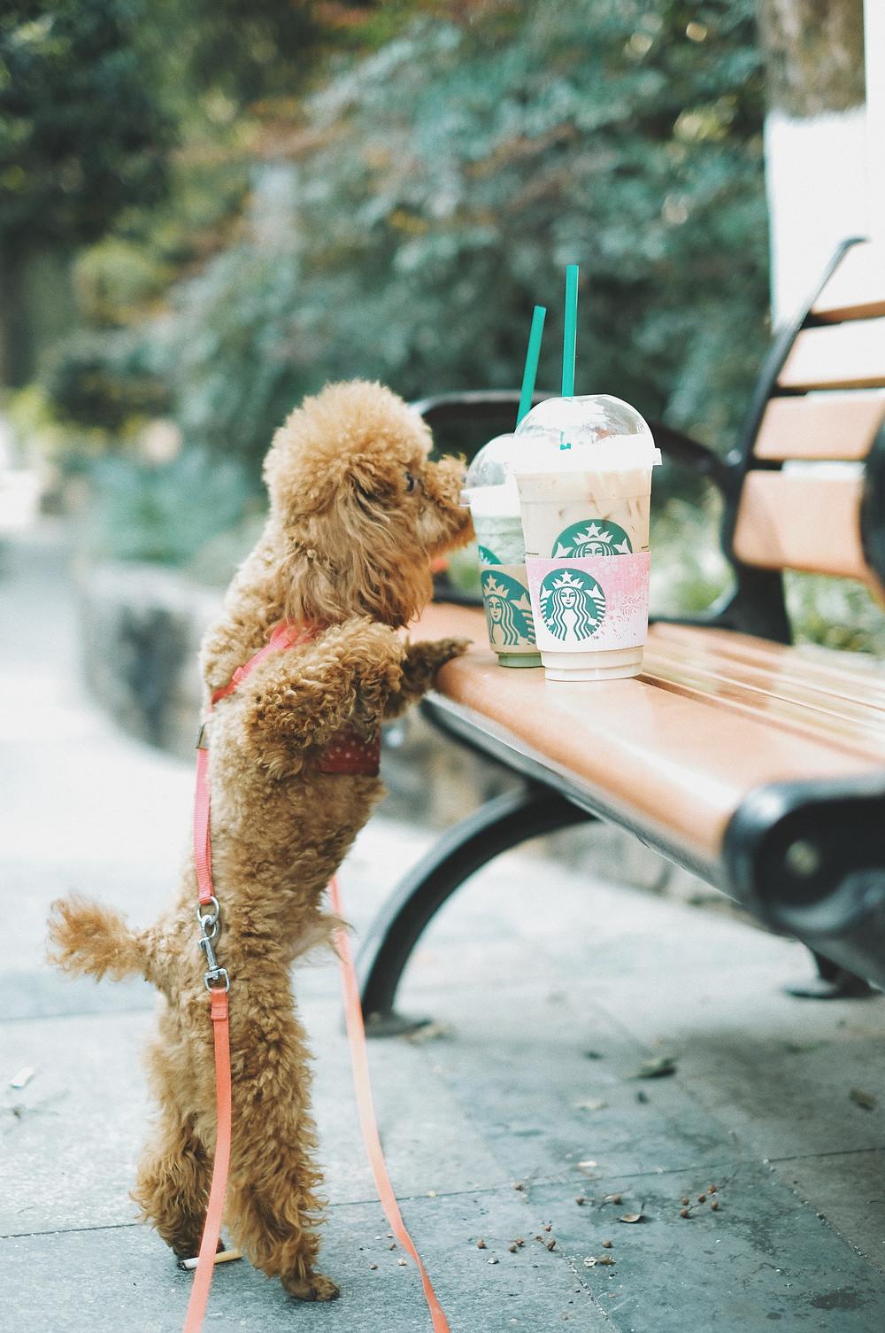 hond eet voedsel van straat