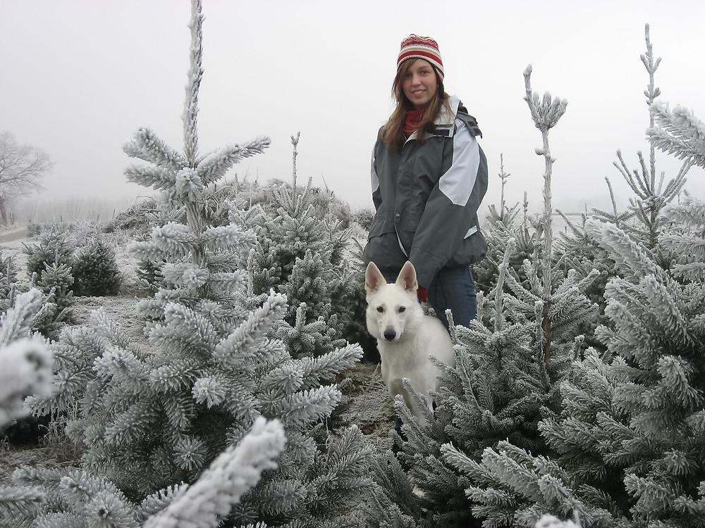 Shera witte herder hond
