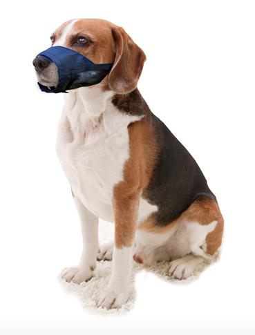 Hond draagt muilband