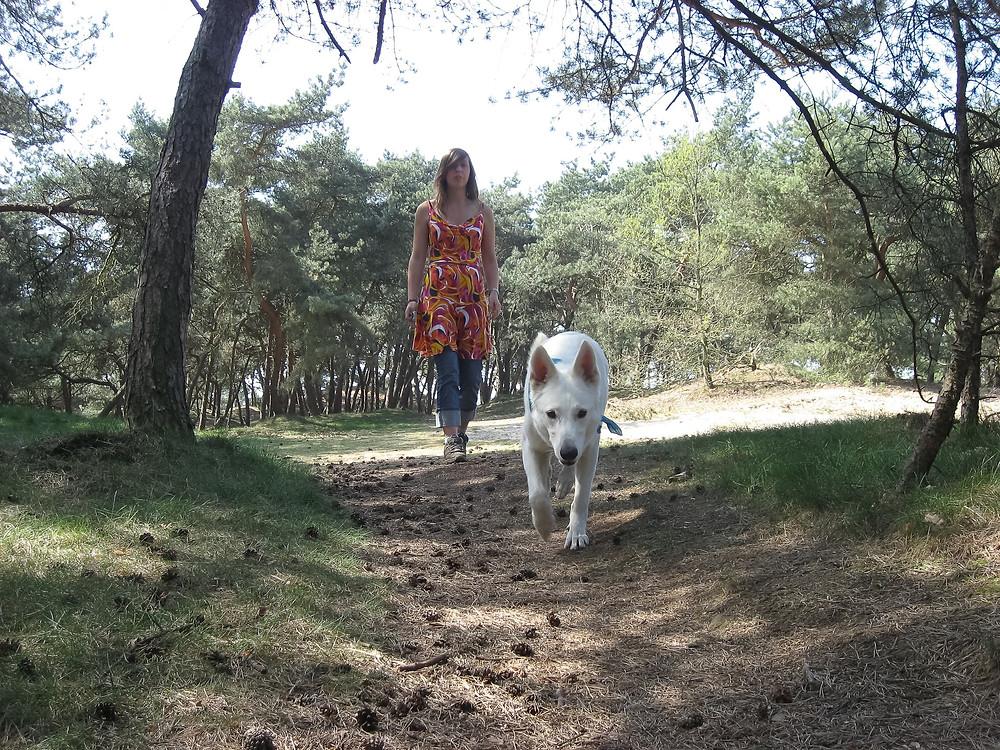 zwitserse witte herder hond