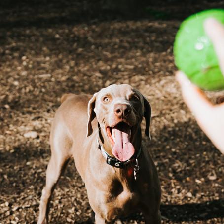 Is jouw hond een apporteer-junkie?