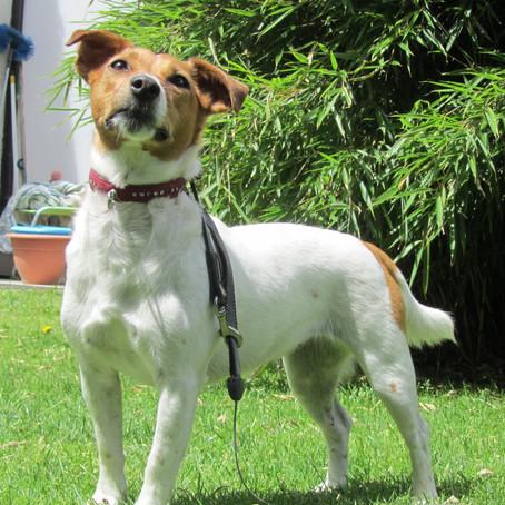 Voeding voor honden met een voedingsallergie of intolerantie: Bestaat deze?