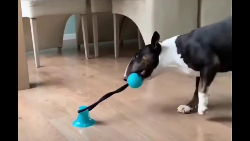 Hond trekspeeltje