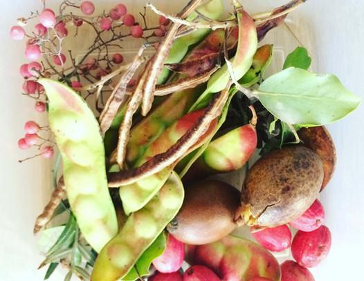 Frutos nativos