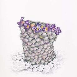 Viola turrieta
