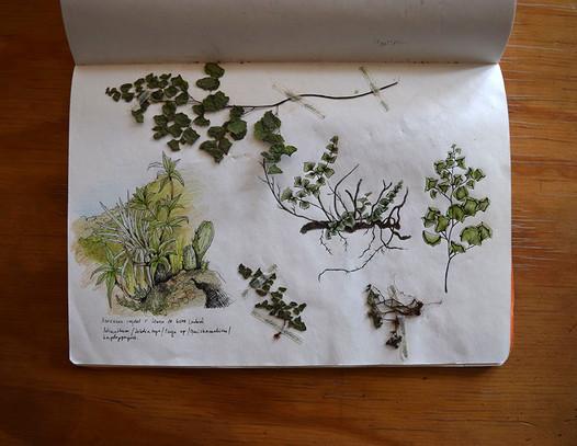 diario naturalista