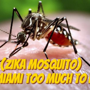 ZIKA MOSQUITOES FIND A NEW HOME IN MIAMI.