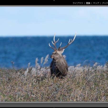 撮影した画像がボヤッとしている❓簡単に解像感をアップする方法3種類とハイパスフィルター ❗️
