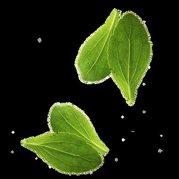 kisspng-leaf-vegetable-basil-leaf-vegeta