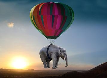 elephant-2605692.jpg