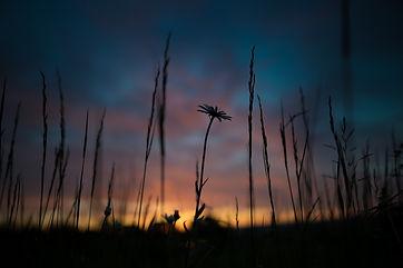 sunrise-1983740_1920.jpg