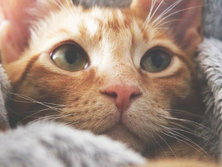 Sollten schwangere Frauen Katzen meiden?