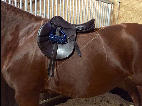 pferd, pferdeergonomie, sattel, anatomie, reiten, springen, dressur