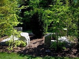 Yew II by Bruce Daniels