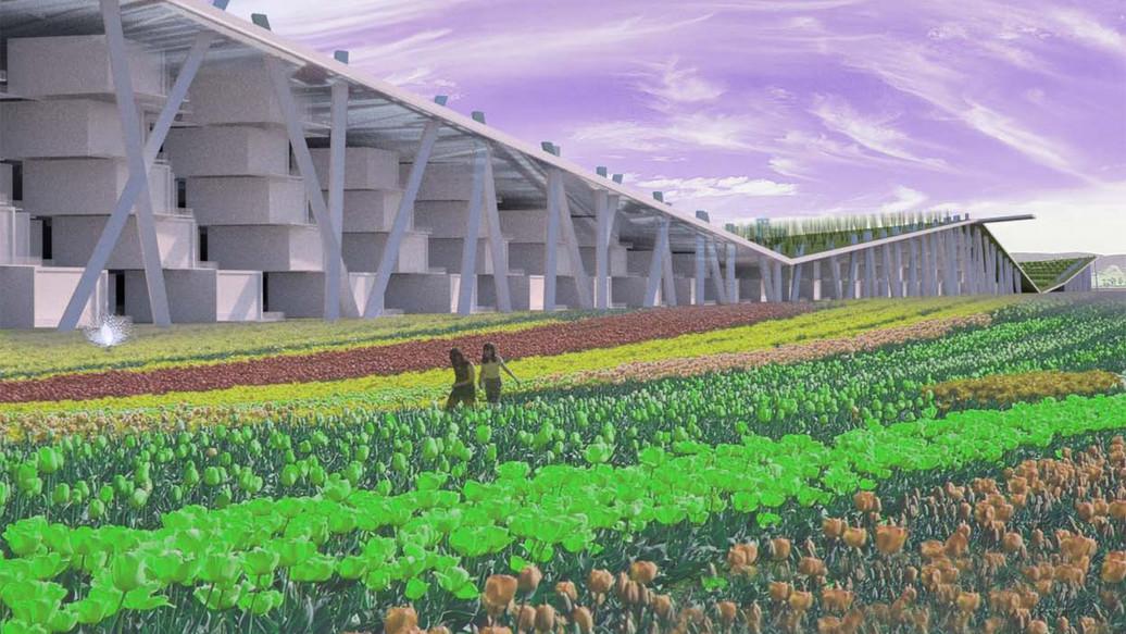 Cofco Farms_109.jpg