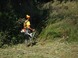 plans de gestion d'emprises en végétation.JPG