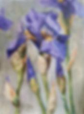 iris - Barbara Conaway.jpg