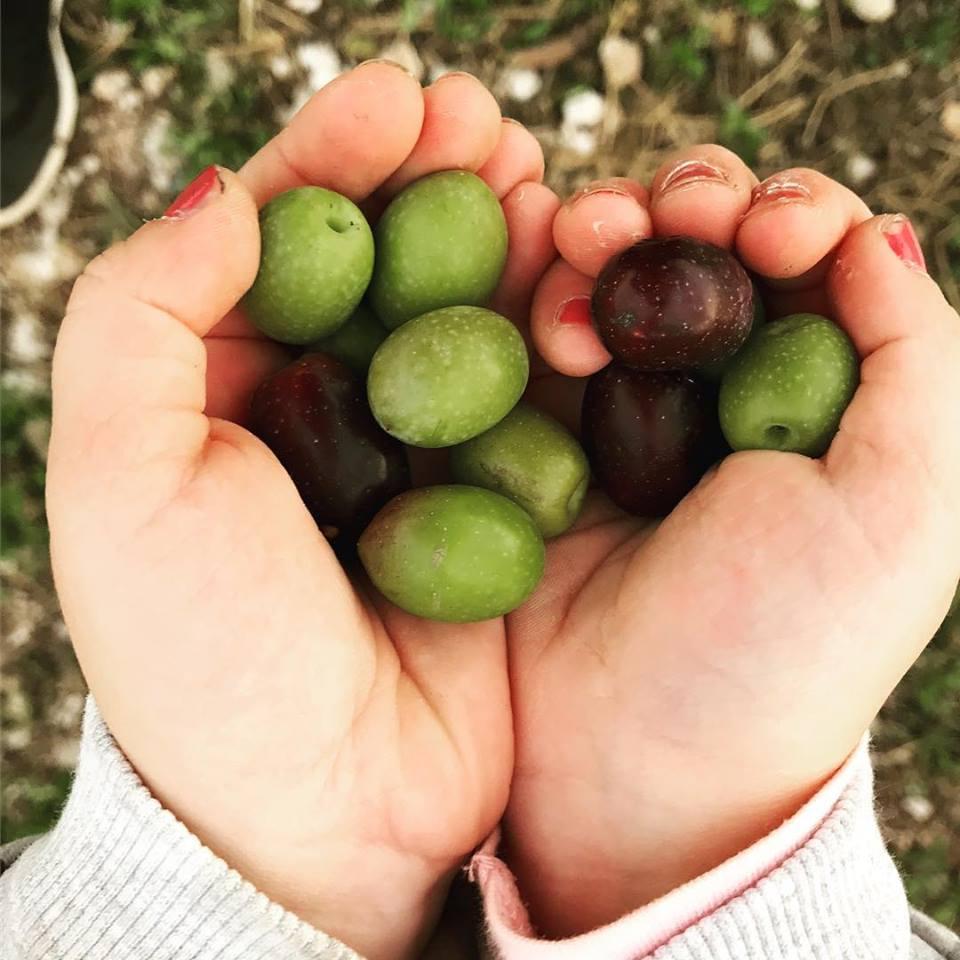 In Sylvis - olives