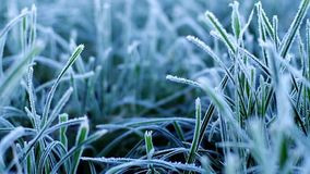 grass-first-frost-morning-46914915