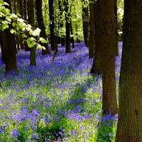 28th April 2013  'SPRINGTIME' from I AM I:The In-Dweller of Your Heart – Ascension