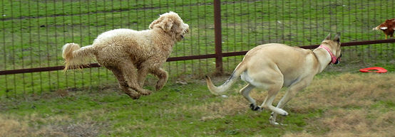 Ennis Texas dog boarding daycare playtime Camp FurBaby