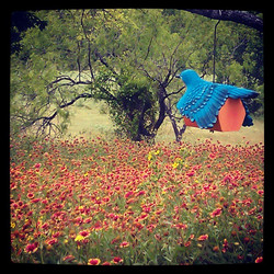 Birdhouse with Texas Wildflowers