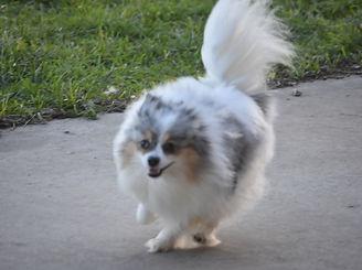 doggie daycare dog boarding kennel princess