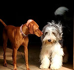 2 dogs at Camp FurBaby, Ellis County, TX