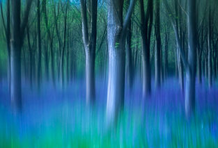 English Bluebell wood, abstract