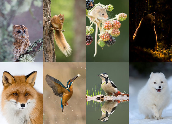 selection of eight greetings cards of wildlife and nature, birds and mamals.