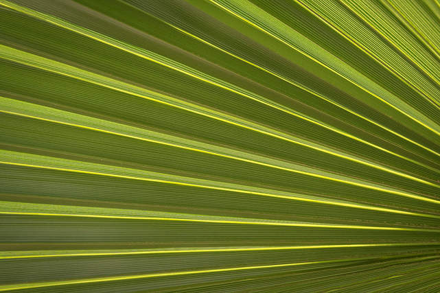 Abstract Palm frond_000000899555.jpg