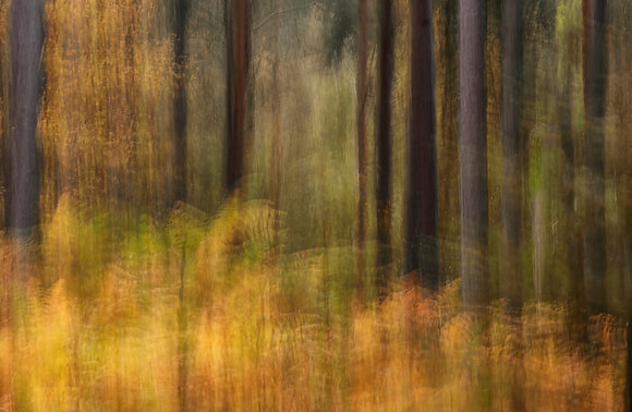 Motion blur abstract of autumnal woodland
