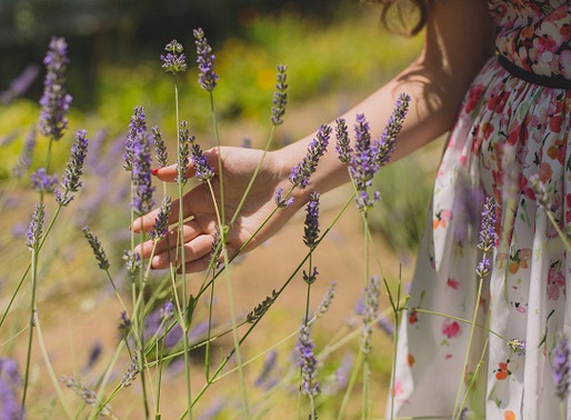 The Best Essential Oils for Anxiety Relief
