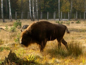 Kelionės į Baltarusiją 2004/2010m.