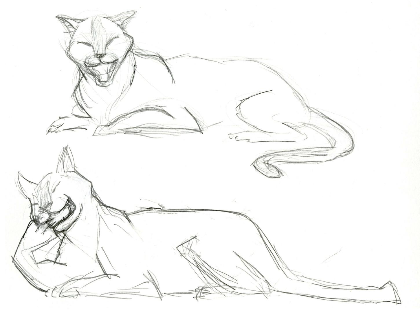Resting_Cougar.jpg