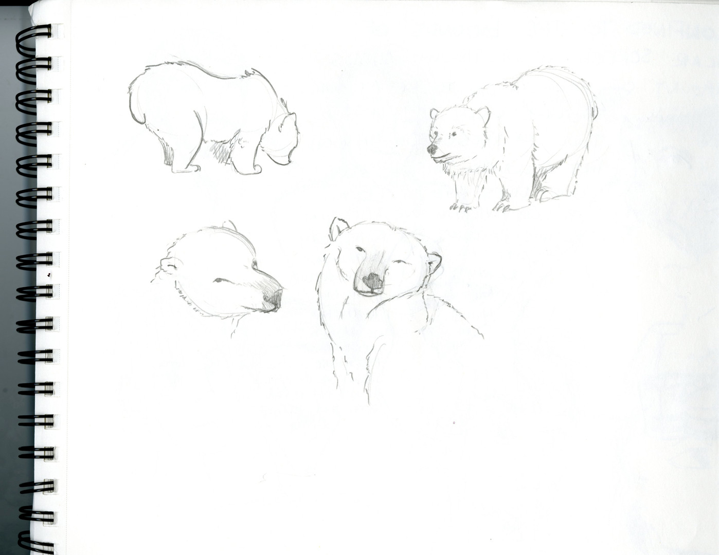 Polar_Bears001.jpg
