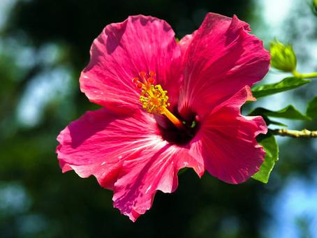 10 Tips pa un jardin cu mas flor