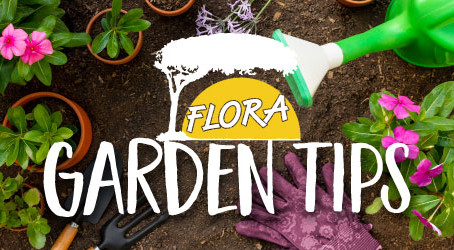 Garden Tips by Flora: