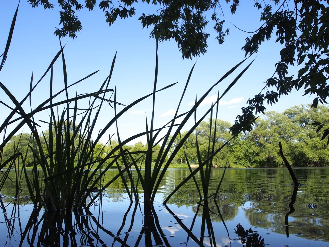 P8237880 - Rideau River, Strathcona Park