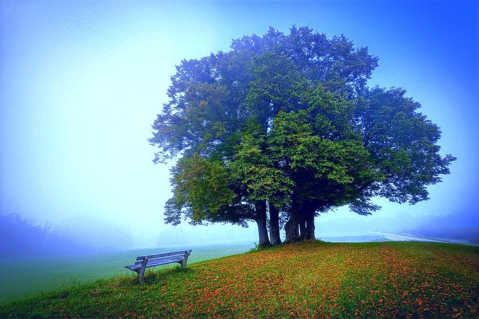 landscape-5591270_1920_edited_edited_edited.jpg