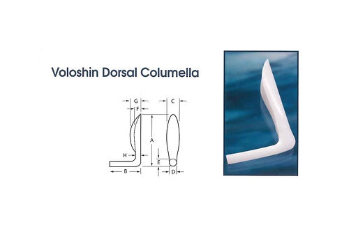 Voloshin Dorsal Columella.jpg