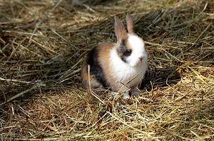hare-4180551_1280.jpg