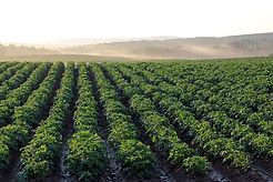 potato-field-4357002_1280.jpg