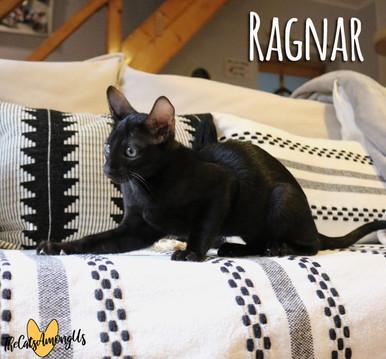 Ragnar2.jpg