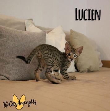 Lucien3.jpg