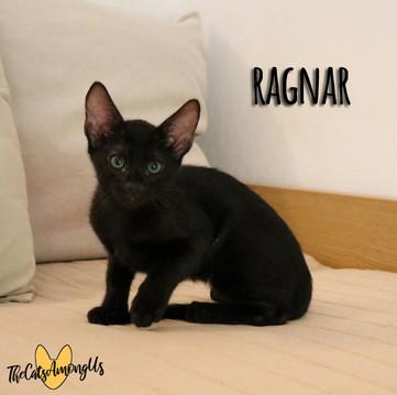 Ragnar3.jpg