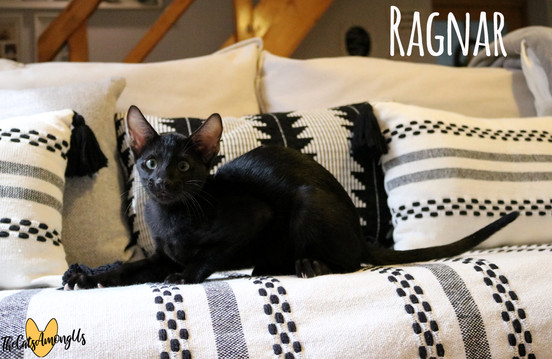Ragnar6.jpg