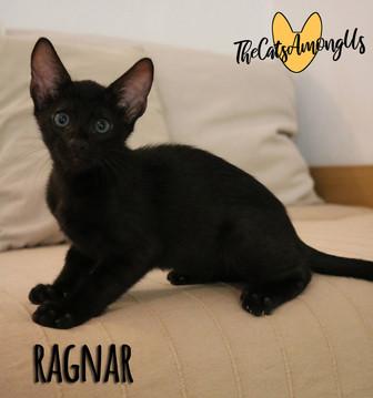 Ragnar5.jpg